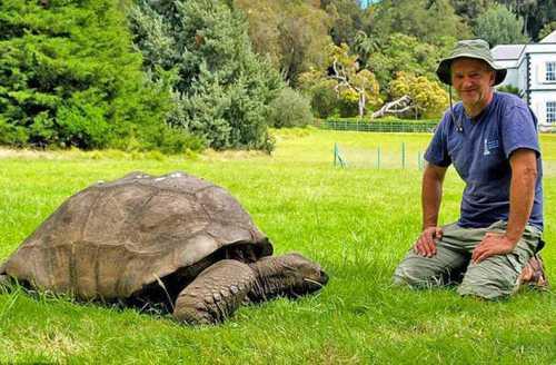 бойцовская черепаха против двух кошек кто же остался победителем в этом поединке